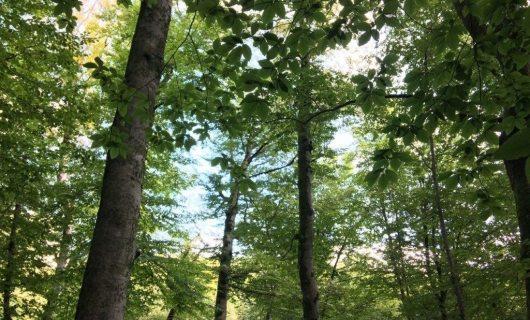 Заблудившуюся в лесу жительницу Сочи спасли с помощью сигнальных ракет