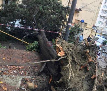 Большой кипарис упал на автомобиль и повредил линию электропередач в Сочи (ФОТО+ВИДЕО)