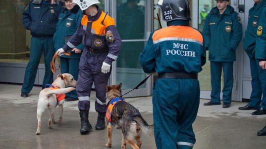 Сообщения о заложенных взрывных устройствах в Сочи оказались ложными