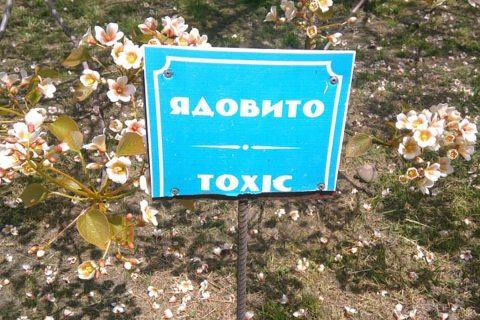 Ядовитое дерево зацвело в сочинском «Дендрарии» (ФОТО)