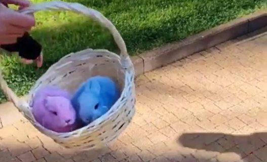 В Сочи фотографы заменили крашеных собак на разноцветных кроликов (ВИДЕО)