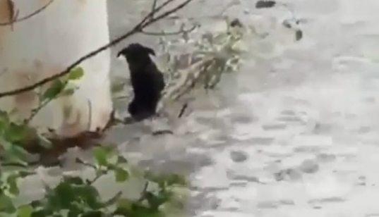 Спасение собаки из горной реки в Сочи попало на видео