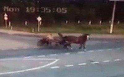 В Чувашии в ДТП с повозкой погибли двое