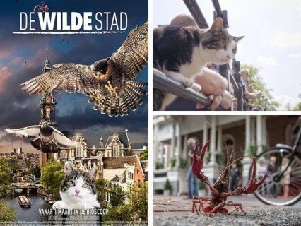 Сочинцам покажут фильмы о природе и экологии